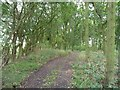 SE3935 : Woodland on the northern edge of Garforth golf course by Christine Johnstone