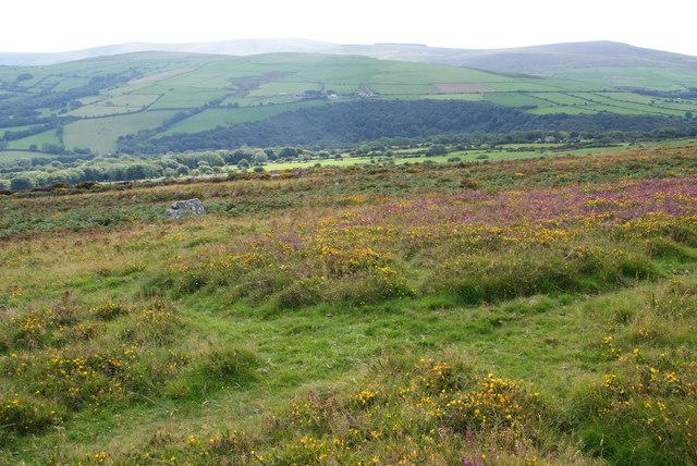 Hillside above Dôl-rhanog