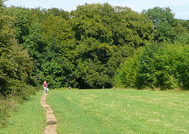 Path towards Blackhouse Wood