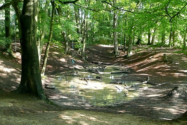 Pit in Blackhouse Wood