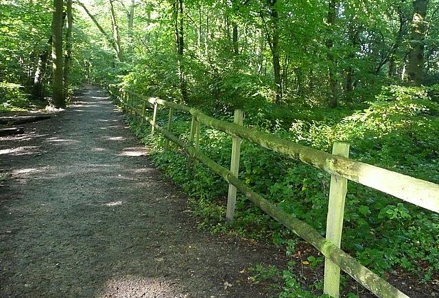 Path in Blackhouse Wood