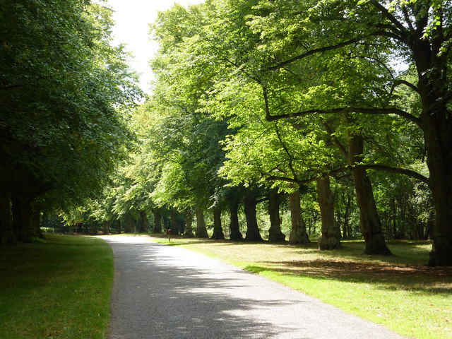 Lime Tree Avenue