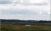 TM3338 : Looking to Bawdsey Marshes by Roger Jones
