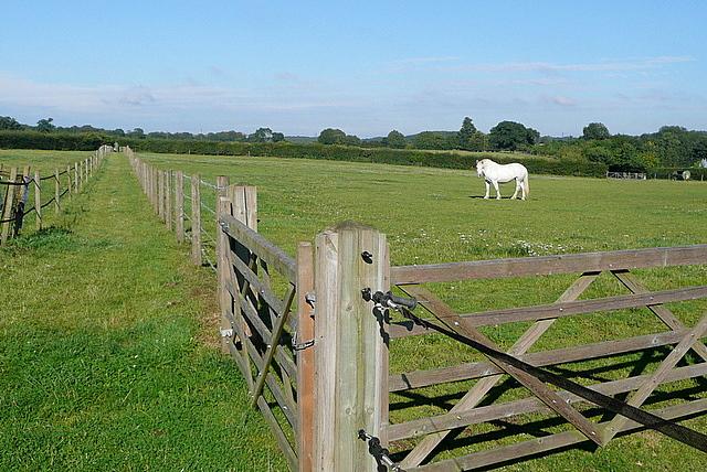 Paddock at Chalkhouse Green Farm