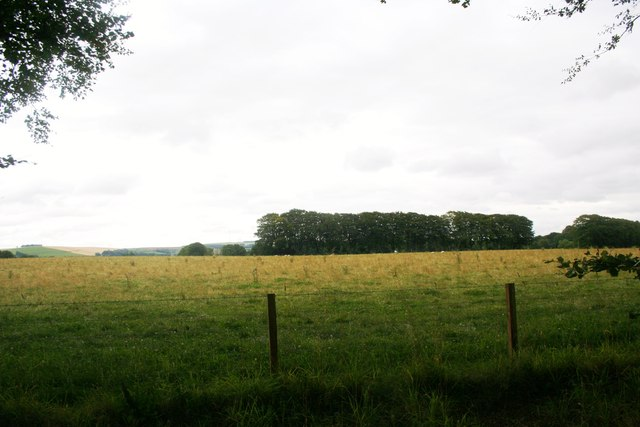Field and trees by Home Farm