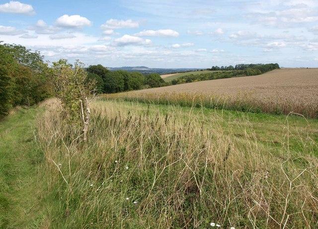 Wheat above Marden Copse