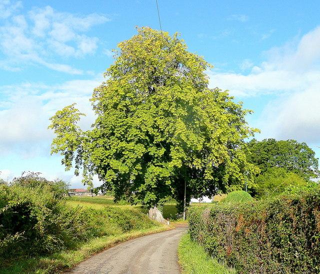 Early autumn; Springetts Lane