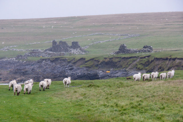 Sheep at the Easting