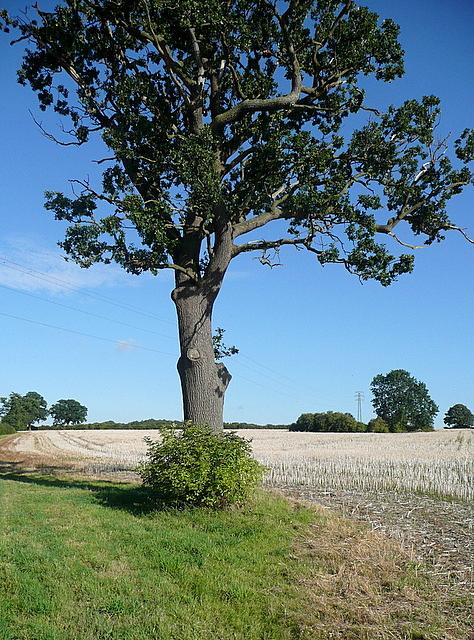 Footpath from Bishopsland Farm