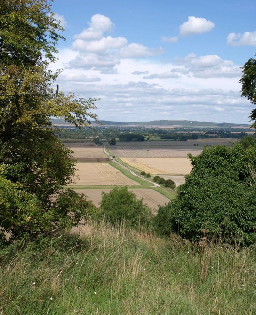 View from Marden Copse