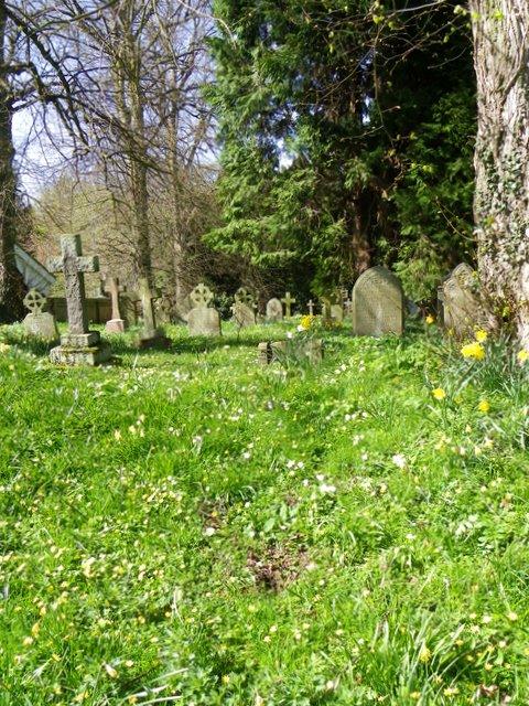 Primroses in the churchyard, Longhirst