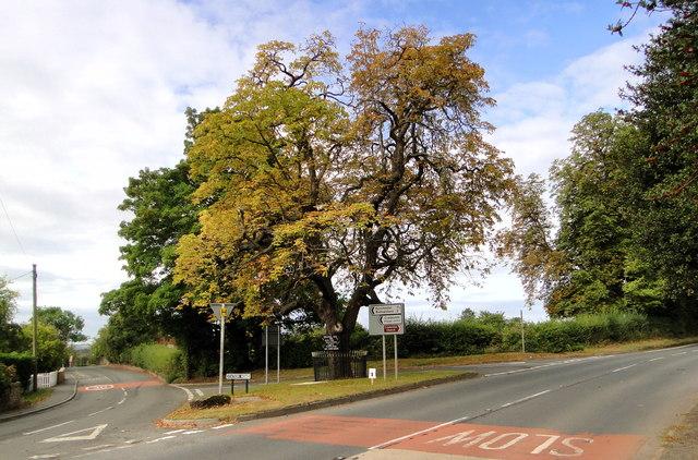 The Tree, Credenhill