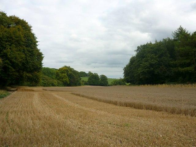 Field between Ashridge Wood and Green Hams Lane