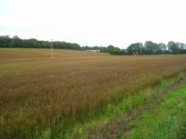 Farmland near Malshanger Park