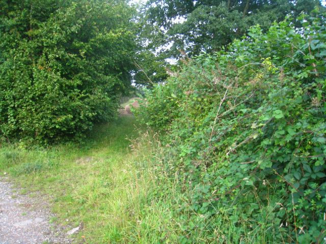 Overgrown field access