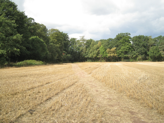 Corner of a harvested field