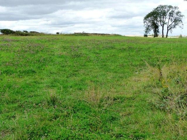 Field entrance full of red clover