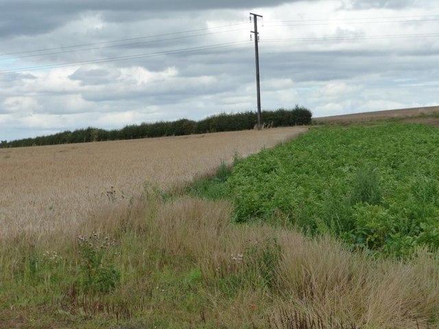 Change of crop, Limekiln Hill