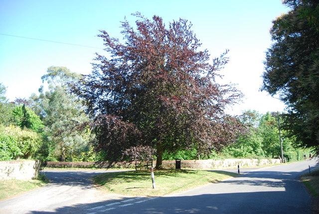 Copper Beech tree, Yopps Green