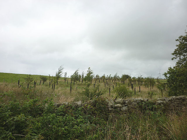Young trees at Roeburn Glade