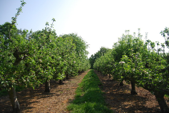 Orchard near Brenchley Manor
