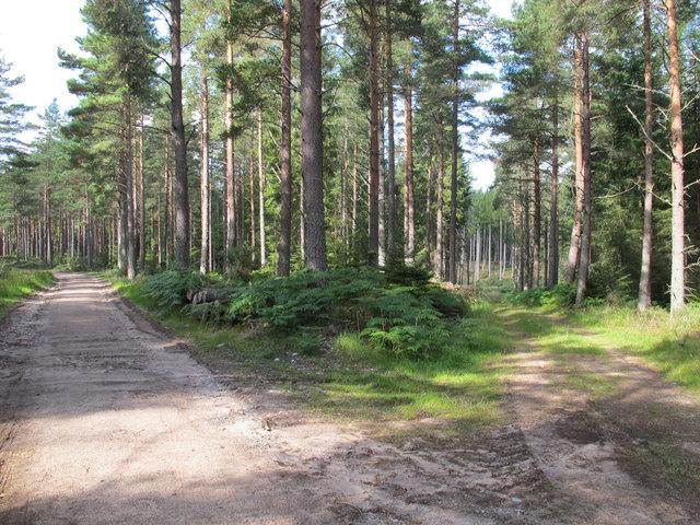 Tracks in Darnaway Forest
