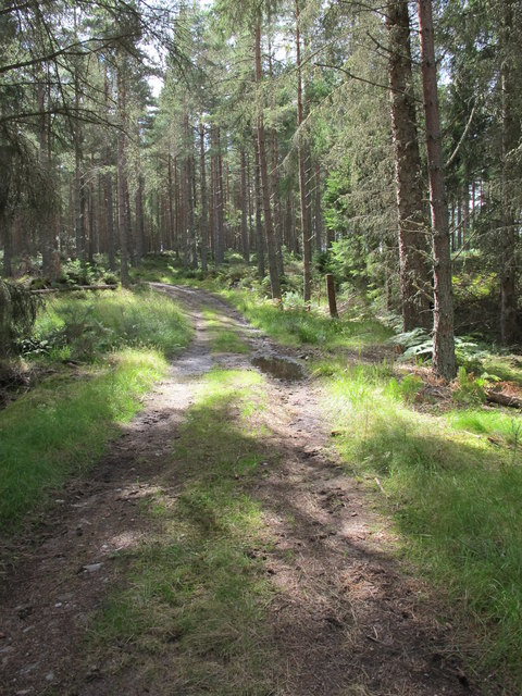 One of many tracks in Darnaway Forest