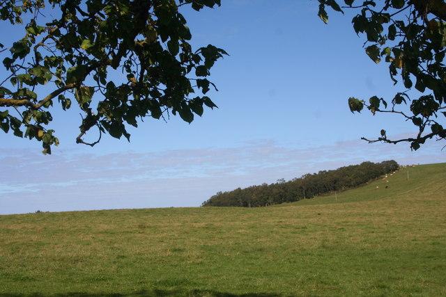 Haughs of Grange Grassland