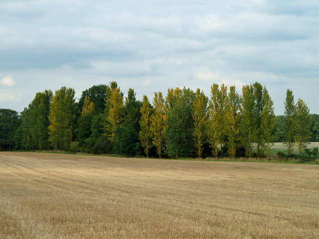 Autumn colours in August