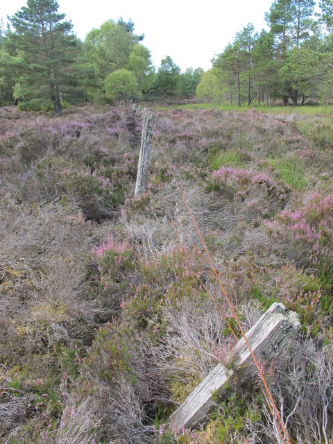 Boundary Fence In Darnaway Forest