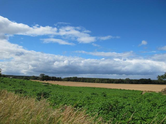 Farmland Near Earlsmill