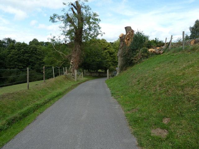 Pollarded trees near Stedham Mill