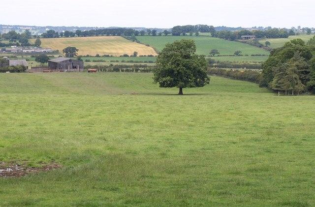 Field by Wet End Wood