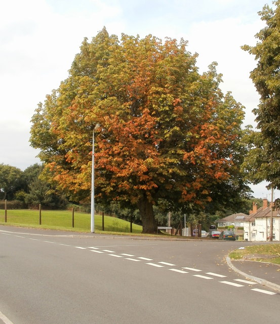 Unusually early autumn colours, Brynglas, Newport
