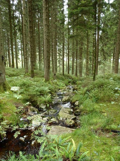 Forest Burn near to Loch Ken