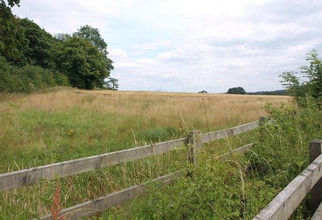 Field by Wike Wood