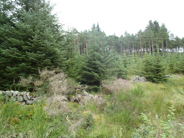 Old Dry Stane Dyke near Englishmen's Dub, Lowran Glen