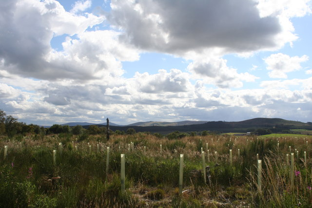 Plantation by Avochie