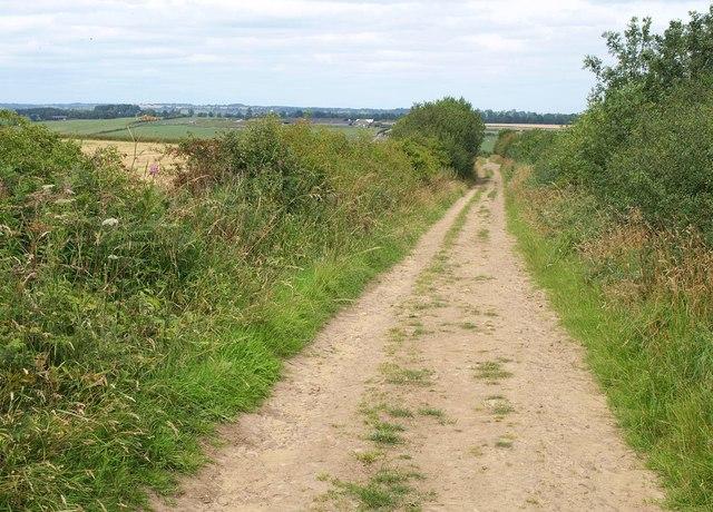 Bridleway to Spring Wood