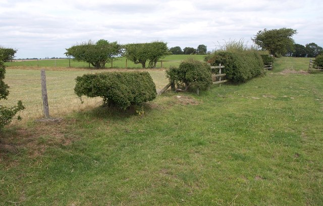 Intermittent hedges by the Leeds Country Way