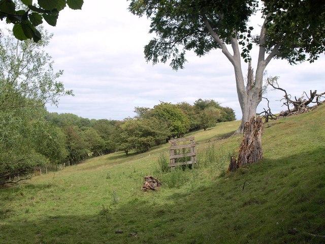 Valley side by Brandon Lane
