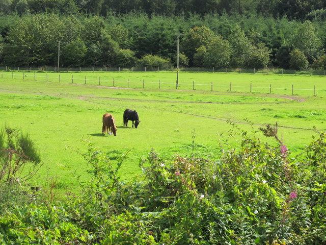 Field Near Earlsmill