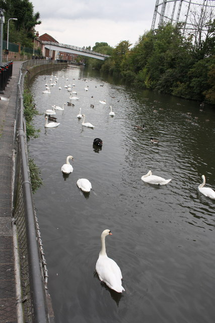 Fowl play on the Kennet