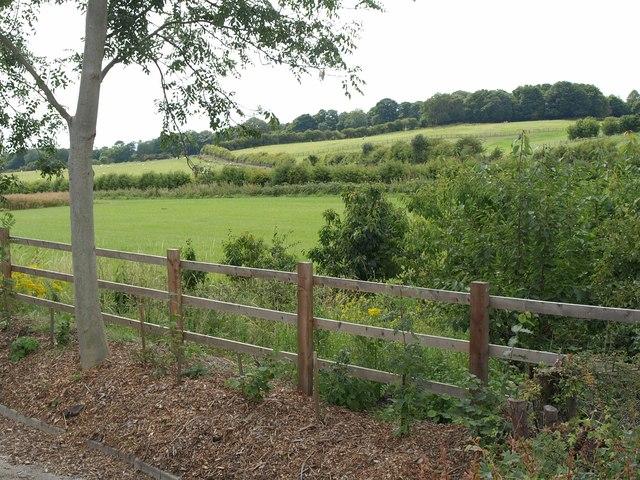 Fields, Shadwell