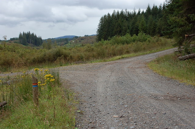 Forest road junction, Achray Forest