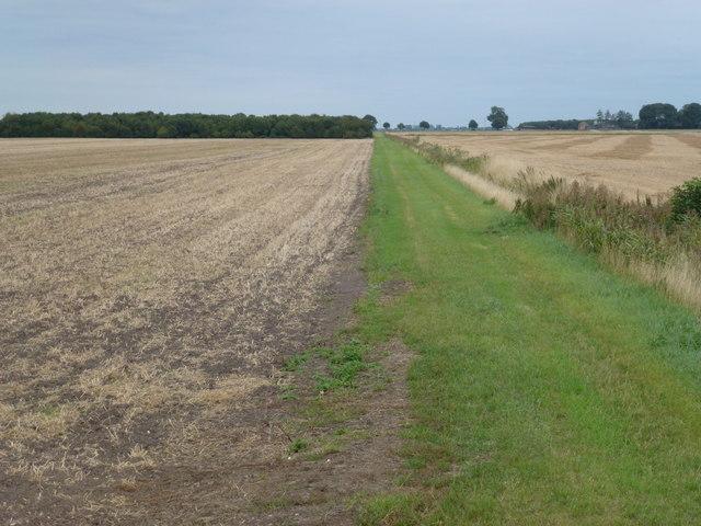 Farmland, New Cut, Thorney