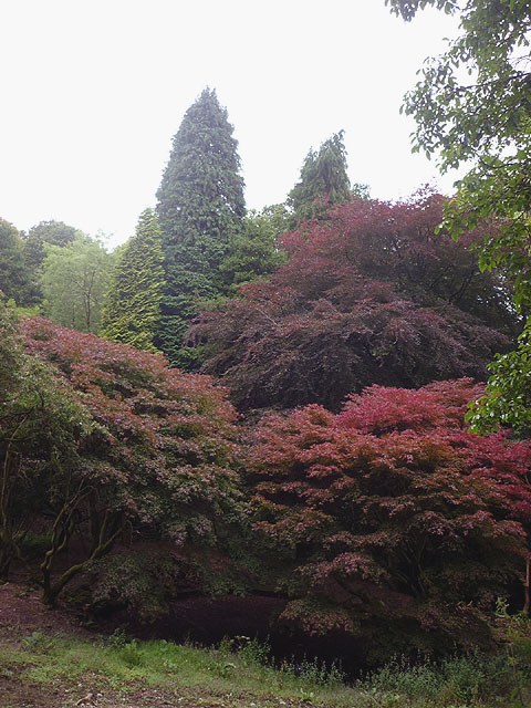 Exotic trees by Littledale Hall