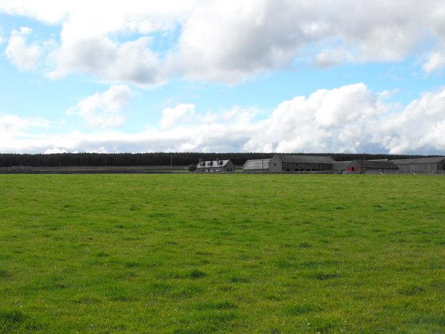 Blingery Farm