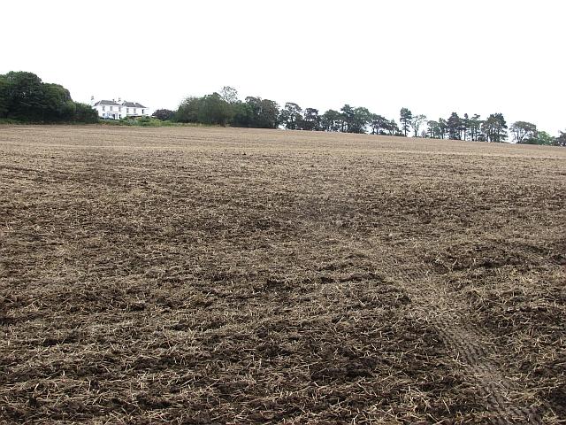 Replanted field, Bonnytoun