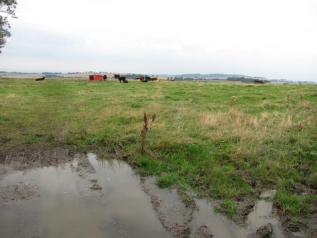 Cattle, Ochiltree